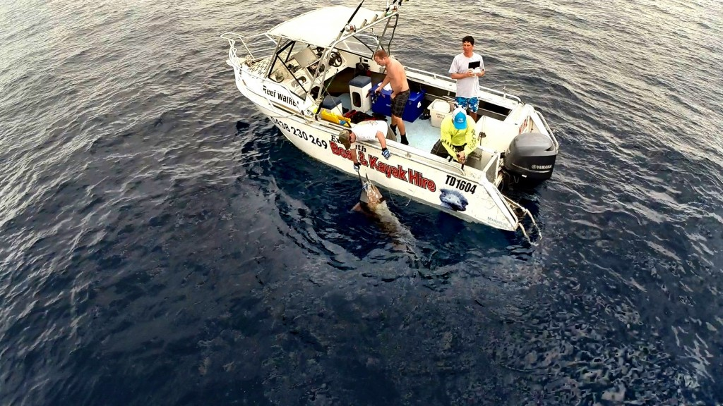 Marlin Fishing out of the 6m Hire Boat: Lots of deck space for game fishing